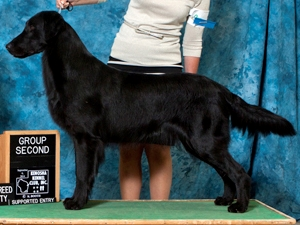 GCH Gamekeepers Prince Charming RN JH